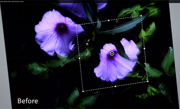 Photoshop CS7(?) Image Deblurring: Purple Flowers (Roll Over or Tap for the Before & After)